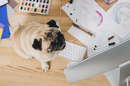 """""""Jag vaktar ditt skrivbord medan du är på toa, matte""""."""