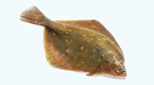 Trålad rödspätta från Östersjön rött ljus i fiskeguiden.
