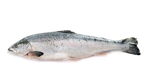 Även lax som är vildfångad lax från Nordostatlanten (inklusive Östersjön) får rött ljus. Lax som är KRAV- och ASC-certifierad får däremot grönt ljus.