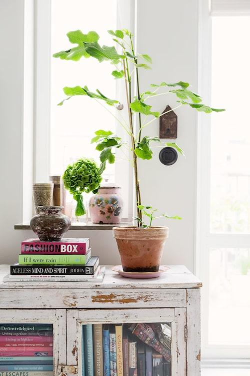 Indiskt skåp med växter och bokinspiration