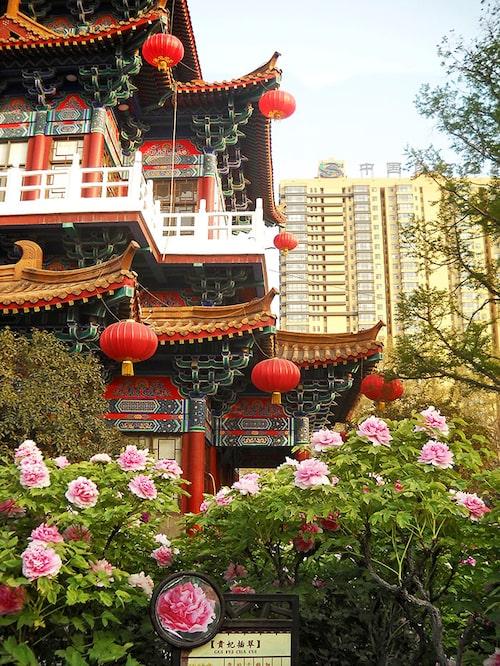 Wang Cheng-parken i Luoyang. Här firas pionfestivalen. Foto: Kjell Furberg