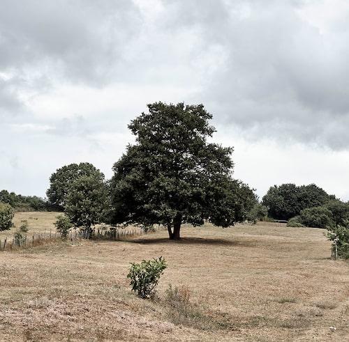 Hanne Polis två hektar mark ligger utanför den lilla staden Trevignano Romano norr om Rom och gränsar till ett naturreservat. När hon köpte egendomen kring millennieskiftet fanns varken hus, vatten eller el på plats.