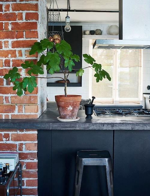 Intill den utskjutande kökshalvön är murstockens tegelvägg framtagen. Ett litet fikonträd, från Floristkompaniet, sätter färg. Mortel, Vikingsun.