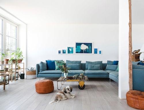 En 6–12-manssoffa kräver ett stort rum och det har den här Ikeasoffan. Soffbordet är vintage liksom skinnpuffarna, hunden heter Kirsten. Blå grafik av Mette Maries väninna, konstnären Anne Nowak.
