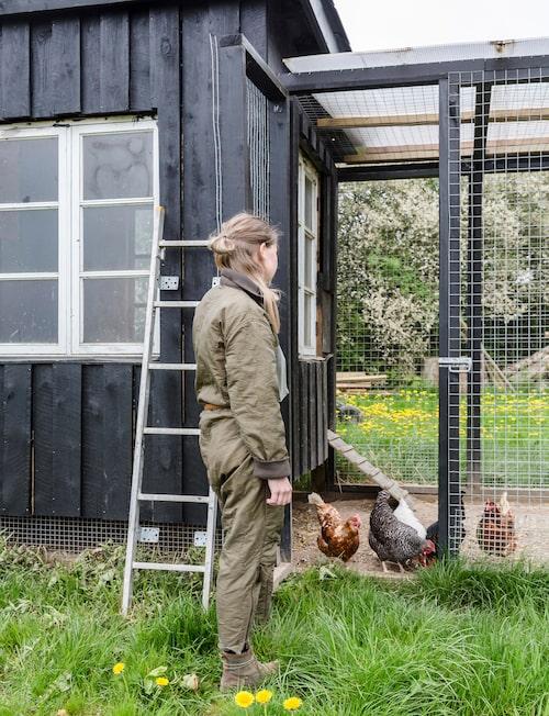 I ett litet hus som matchar stallet värps dagligen tjogtals icke EU-standardiserade ägg.