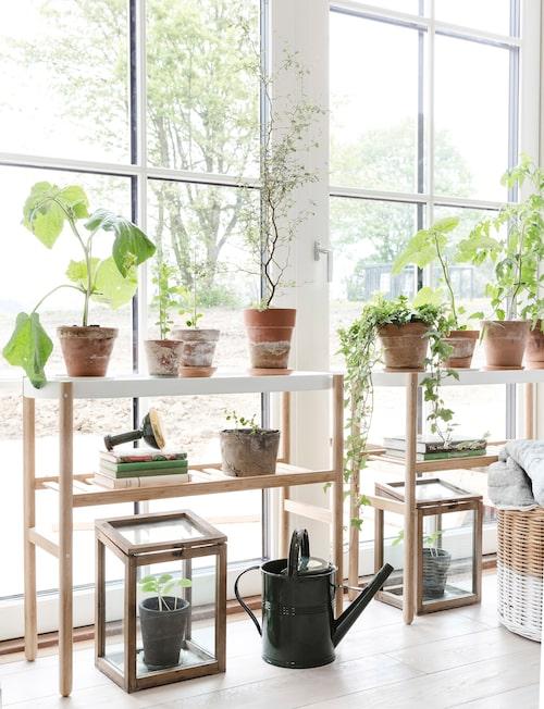 Växtligheten mår prima på luftiga sidobord med hylla från Ikea.