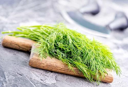 Dill och persilja är klassiska grönsaker för höstsådd.