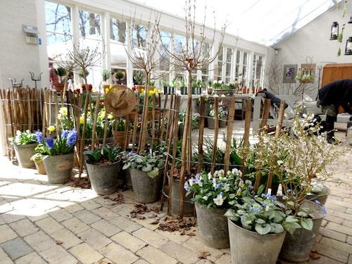 Träd och buskar i vårkrukan