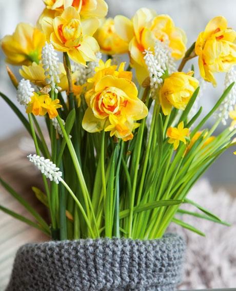 Vårlökarna Narciss 'Jetfire' och vita pärlhyacinter är en lyckad kombo.