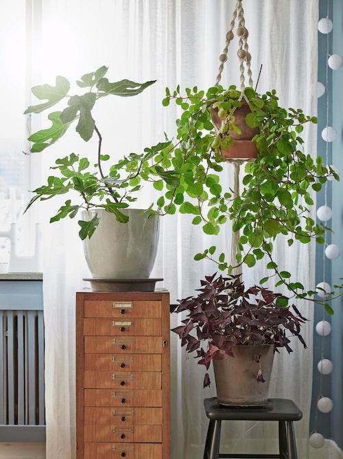 Växter lite varstans, här i hallen på en arkivbyrå, köpt på Formstad auktioner, och ampel från Ikea.