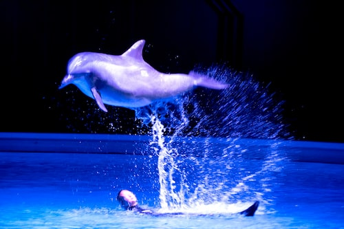 Inget Kolmården utan delfinshow.