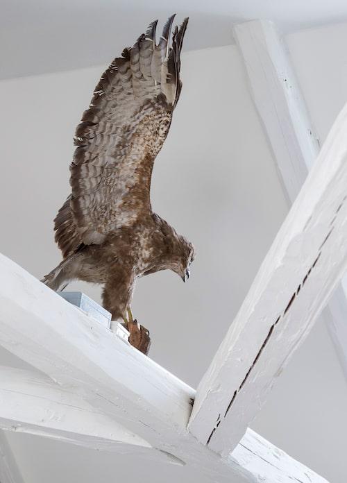 Örnen har varit Jonas styvfars och fanns i Jonas barndomshem.