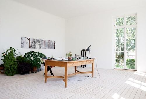 Skissbordet i Ingegerds arbetsrum, omgivet av gröna växter, bilder och minnessaker. Lampa Arne Jacobsen.