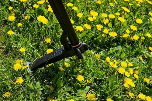 Få bort maskrosor ur gräsmattan är ett hästgöra. Med en maskrosupptagare skonar man ryggen. När det är fler maskrosor än det är gräsmatta, kanske man istället bör anlägga gräsmattan på nytt.