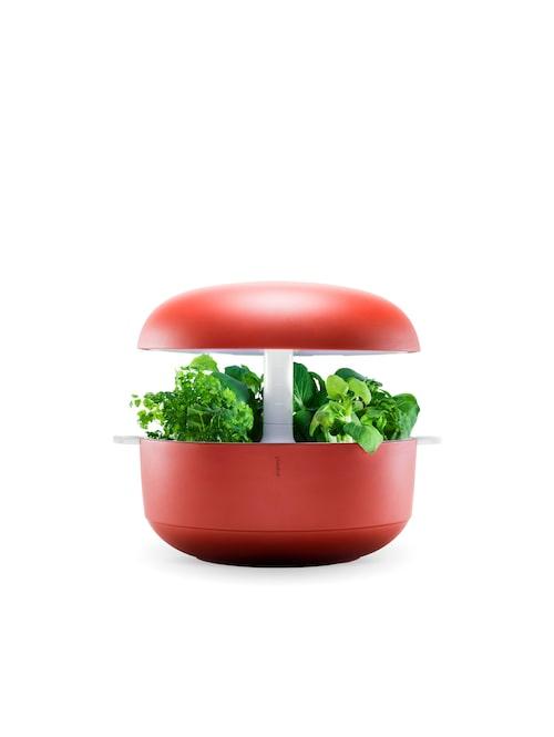 Häll i vatten, lägg i frökapslar och slå på lampan. I den här ufo-liknande behållaren odlar man hydroponiskt, alltså i vatten. Plantui smart garden, 2995 kr, Wexthuset.