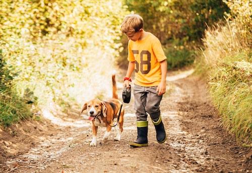 Hur förbereder vi både hund och familj på den nya familjesituationen? Hur får vi en bra start? Behöver vi anmäla oss till valpskola? Att få tips och råd på hur du bäst tar hand om en din hund är guld värt. Här hittar du all info du behöver.