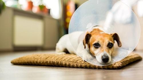 Se till att ha en bra försäkring som täcker allt. Du vet aldrig när din pälskling blir sjuk eller i värsta fall, är med om en olycka.