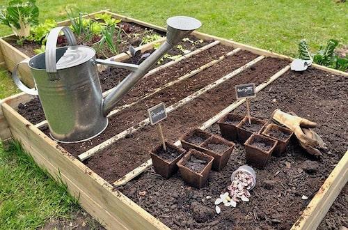 Bygg en upphöjd bädd om du har tunt jordlager.