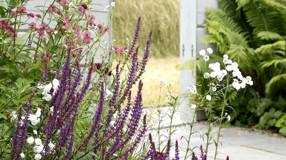 Nyckeln till en vacker och lättskött trädgård är att välja rätt växt till rätt plats.