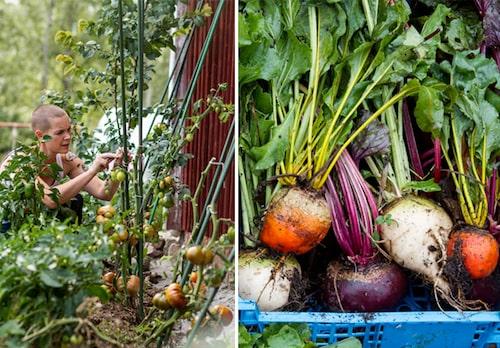 Sara Bäckmo är en fenomenal självhushållare med grönsaker och frukt.