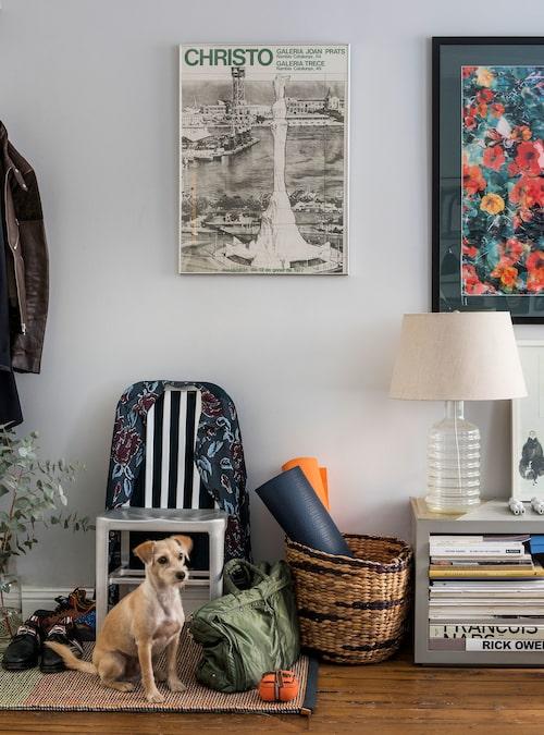 """Bruce, 6-årig gatuhund från Los Angeles, har sin favoritplats på Kasthallmattan. Stol av amerikansk """"hangarfartygstyp"""", bänk och lampa, Crate & Barrel. Blomsterfotot har Hampus tagit med sin Leica."""