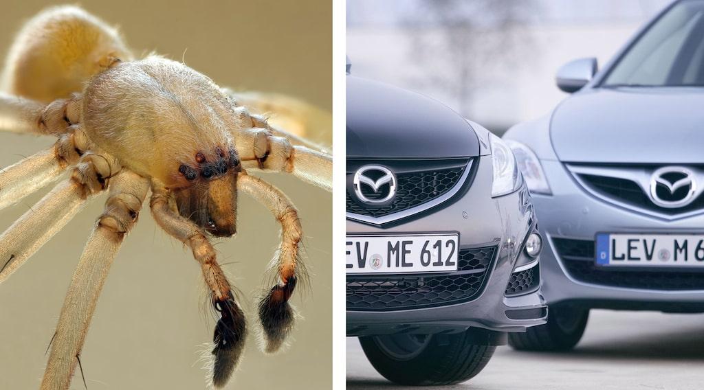 Mazda 6 med spindlar i tanken