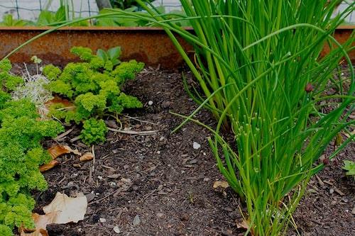 Ett land med höstsådda grönsaker får ett försprång på våren och ger snabbare skörd.