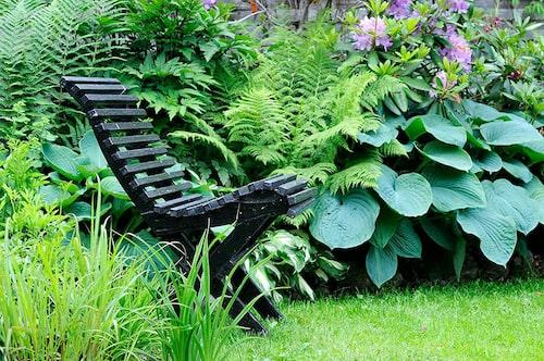 En skuggig plats med sköna gröna perenner.