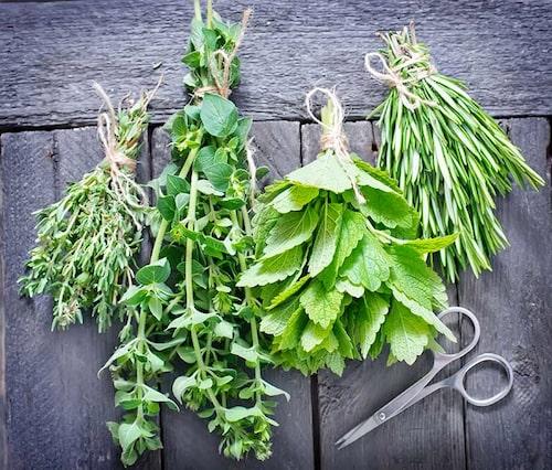 Kryddväxter som skördats och nu ska torkas. Häng inte kryddbuketterna i fönstret!