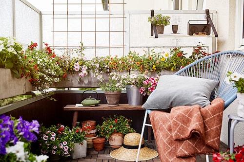 Strössla med blommor på balkongen för mer färg och glädje. Gamla utemöbler får nytt liv med blommor och en färggrann kudde eller filt. FOTO:Blomsterfrämjandet/Lina Arvidsson