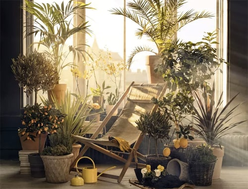 Medelhavsväxter trivs bra ute på balkongen och kan övervintras på en inglasad balkong med frostvakt. FOTO: Blomsterlandet