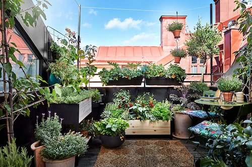 Odla mer ätbart på balkongen – odlingslådor så långt ögat når och kryddväxterna ger en väldoft. FOTO: Plantagen