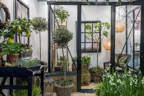 En takterrass med växthus eller inspiration till en inglasad balkong. FOTO:Gustav Kaiser