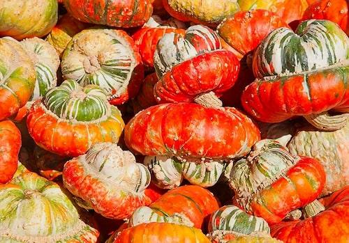 Turbanpumpor har inte bara ett roligt utseende, utan funkar även bra som matpumpor.
