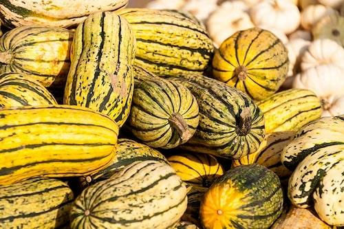 Delicata-pumpor är goda att äta som de är, stekta i skivor med skal och allt.