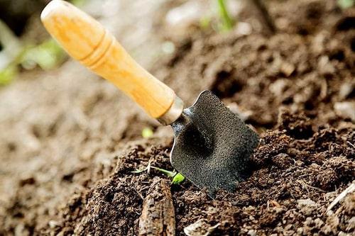 Man jordförbättrar för att att jorden ska få en bra struktur och innehålla näring för växterna, rötterna ska kunna breda ut sig lätt.