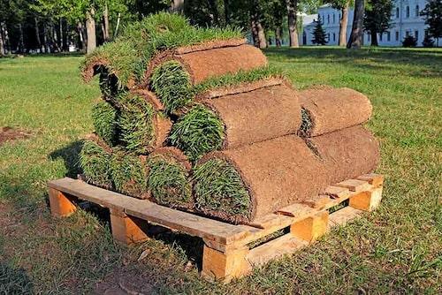 Gräsmatta på rulle torkar snabbt. Plantera inom ett dygn. Vattna och skugga gräsrullarna vid behov.