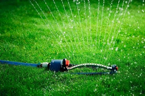 Vattna gräsmattan ofta och mycket de första veckorna, så att rötterna kan etableras i jorden.