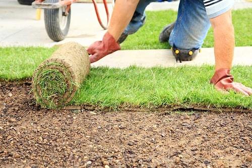 Skona gräsmattan genom att lägga ut en träskiva, och kliv inte på den bara jorden.