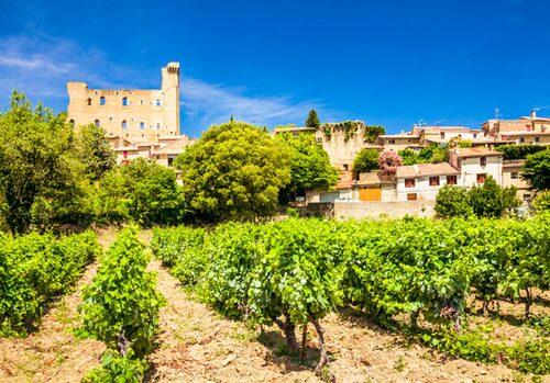 Vingård, Provence i Frankrike.