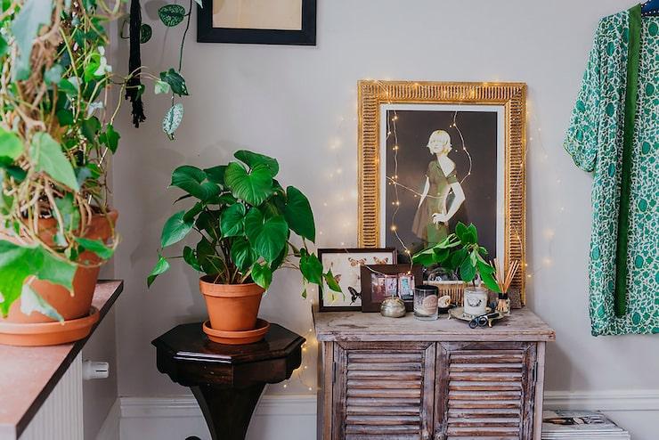 Låt växterna ta plats inte bara på fönsterbrädorna.
