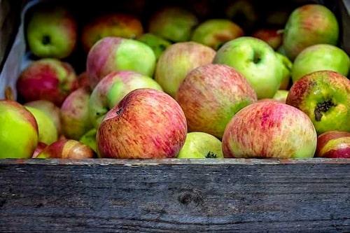 Förvara vardera rotfrukt, grönsak och frukt för sig, äpplen gärna en bit bort från allt annat, då de utsöndrar höga halter eten, som påskyndar nedbrytningen.