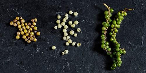Inlagd grönpeppar, torkad grönpeppar och färsk grönpeppar.