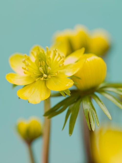 Låt blommorna frodas och skippa gräsklipparen. Ängsblommor trendar! Källa: Hasselfors Garden