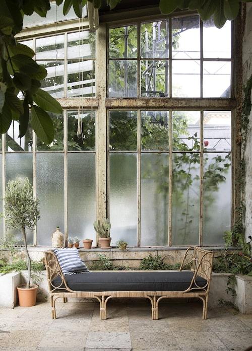 Dagdröm i dagbädden som står inbjudande i ett hörn av växthuset.