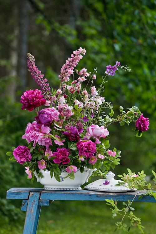 Flärdfri fägring i rosa. Foto: Pernilla Hed
