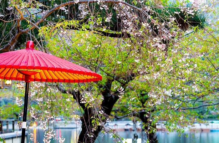 Kyoto är en fantastisk stad med många sevärdheter.