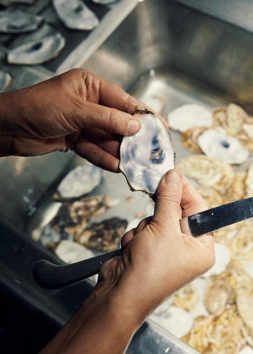 """""""Precis som pärlor är varje skal unikt"""", säger Mia Larsson om ostronen."""