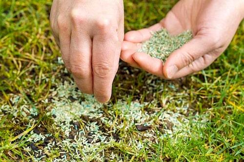 Reparera kala fläckar i gräsmattan genom att kratta ner mull och så in gräsfrön.