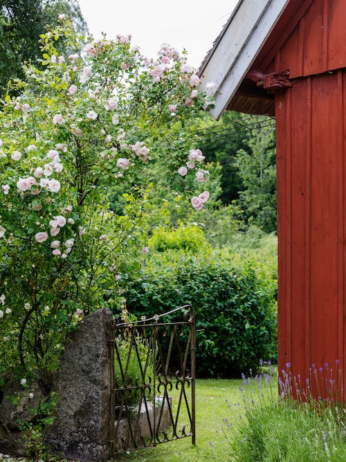 Trädgården nås via en gjutjärnsgrind från 1920-talet som Jan-Erik hittat hos en antikhandlare i Simrishamn.